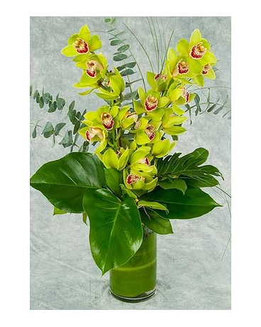 Two Stems of Cymbidium Orchids Arrangement