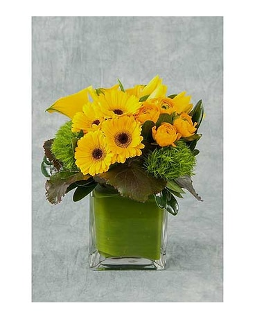 Mellow Yellow Cube Arrangement