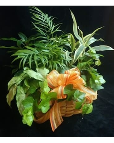 Dish Garden in a basket by Bool's Flower Shop