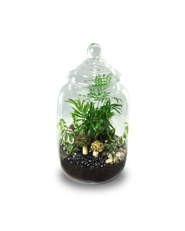 Cookie Jar Terrarium In Ogden Ut Jimmy S Flowers