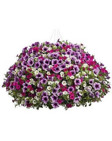 Mixed Petunia Hanging Basket