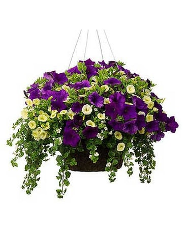 Assorted Hanging Basket