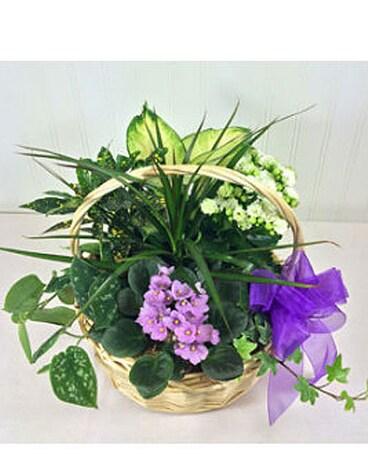 Seattle Florist Seattle Flower Delivery Ballard Blossom