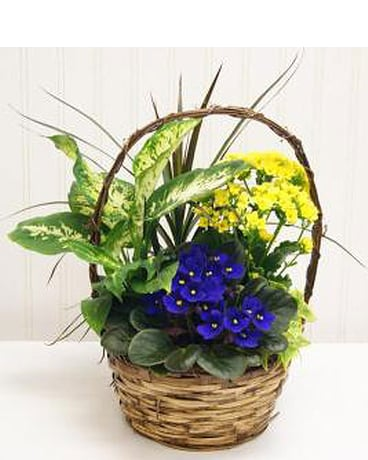 Medium Basket Garden