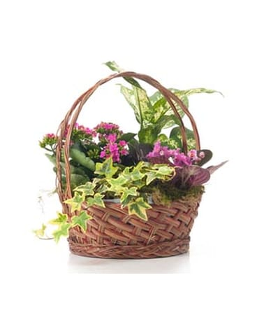 Buds and Blooms Small Basket Garden