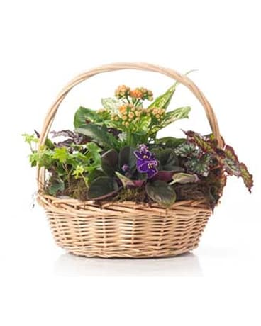 Buds and Blooms Medium Basket Garden