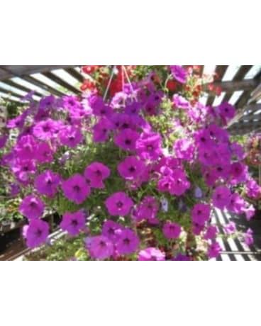 quick view petunia hanging basket