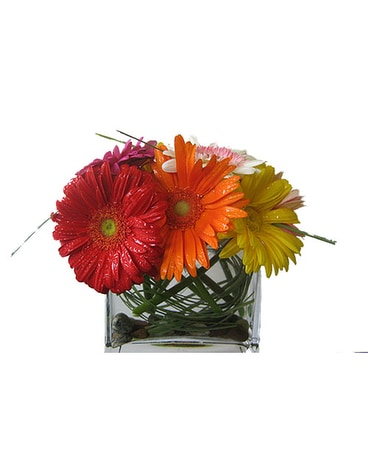 Gerberas on the Rocks