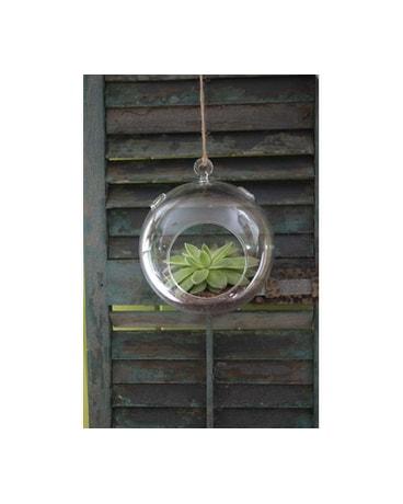 Round Hanging Terrarium In Casper Wy Keefe S Flowers