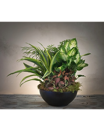 Indoor Plants For Fall Delivery in Rogers & Bentonville, AR