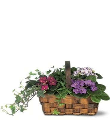 Mixed Violet Basket