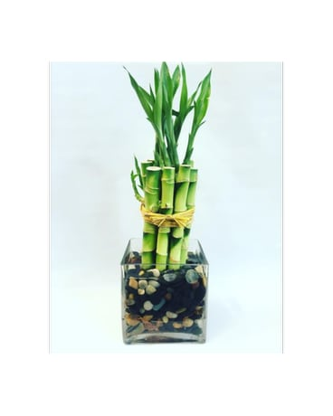 Square Vase Bamboo In West Los Angeles Ca Sharon Flower Design