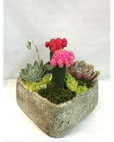 Stone Succulent Cactus Garden In West Los Angeles Ca Sharon