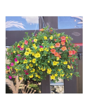 Million Bell Hanging Basket