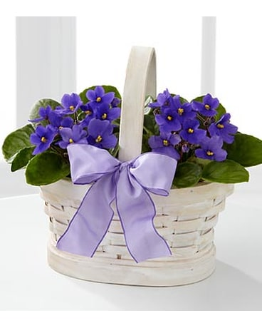 Sweetly Stunning African Violet Plant Duo