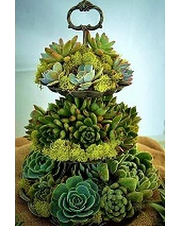 Tiered Succulents
