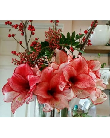 Beautiful Amaryllis Arrangement