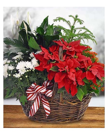 Blooming Poinsettia Basket by Hoogasian Flowers