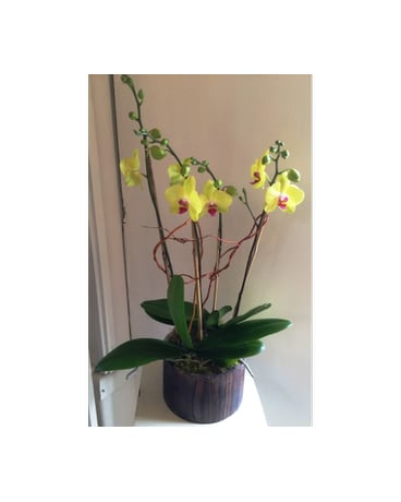 Cheerful Chartreuse Orchids