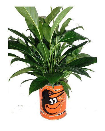 Orioles Peace Lily