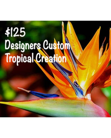 Designers Tropical Creation