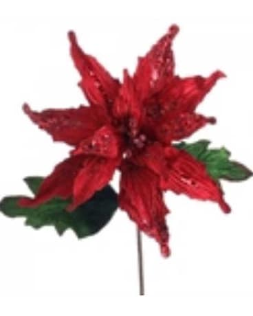 Red and Green Poinsettia