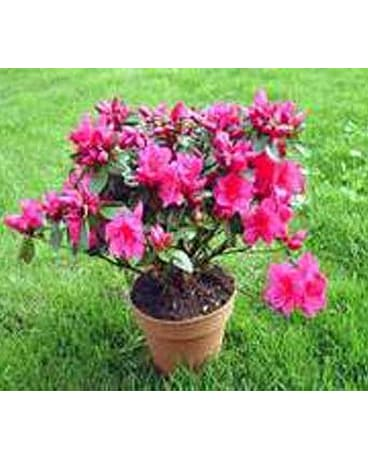 Outdoor Plants And Shrubs Delivery New Britain Ct Weber S