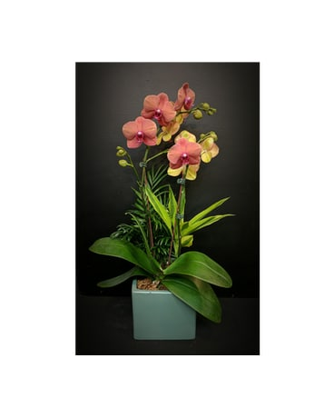 Birthday flowers delivery white rock bc ashberry logan quick view orchid plant mightylinksfo