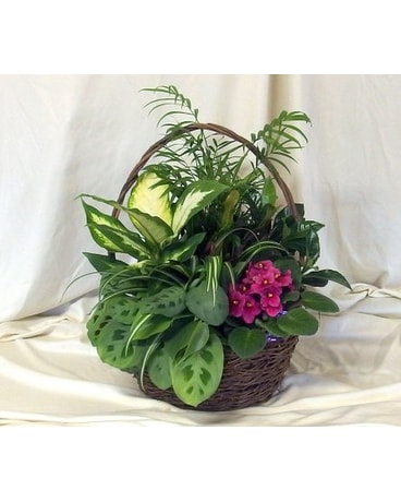 Wicker Garden with an African Violet