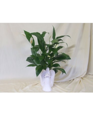 Angel Planter with Peace Lily