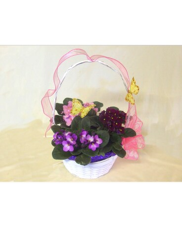 Spring Butterfly and Violet Basket