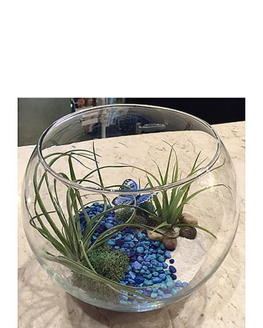 Air Plant Eco Bowl