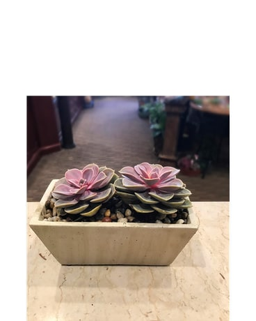 Double Succulent Planter
