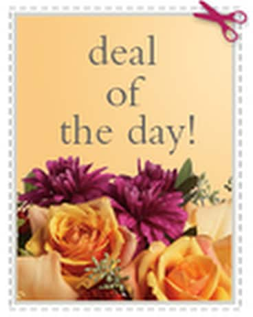 Today''s Daily Deal - Save $20.00 or More!