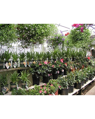 Send The Garden Center in Madison WI - Felly\'s Flowers - Madison The ...