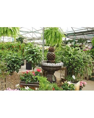 Felly\'s Garden Center in Madison WI - Felly\'s Flowers