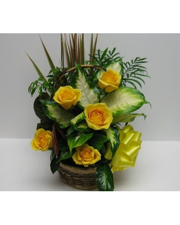 Dish Gardens Delivery Waverly Ny Jayne S Flowers And Gifts