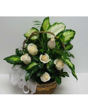 Medium White Rose Garden