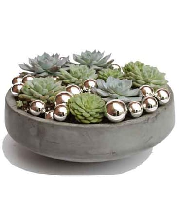 Winter Succulent Bowl