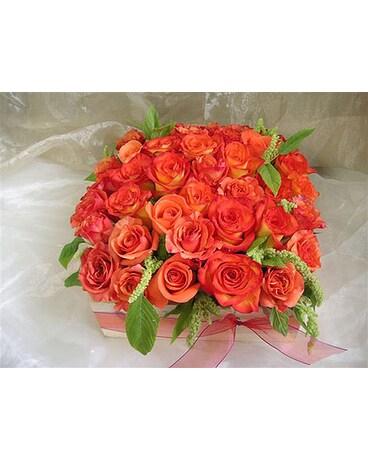 Orange Bed Of Roses In West Los Angeles Ca Westwood Flower Garden