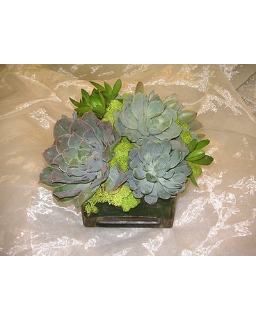 Succulent Plants Delivery West Los Angeles Ca Westwood Flower Garden