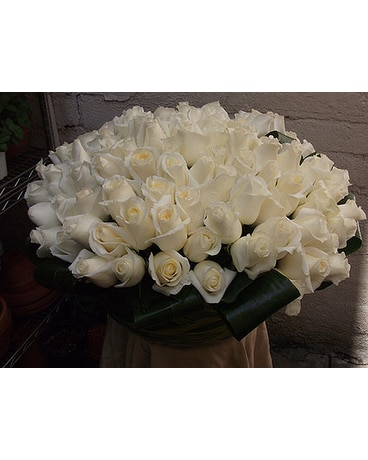 White Rose Spectacular