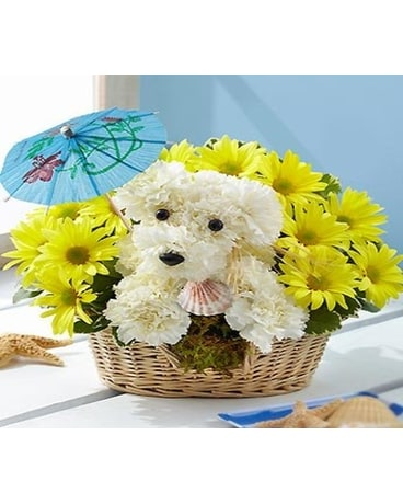 Colorado Springs Florist Flower Delivery By Sandys Flowers Gifts