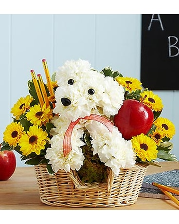 Colorado springs florist flower delivery by sandys flowers gifts shop the collection mightylinksfo