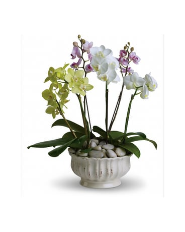 California Orchid Plants, From: