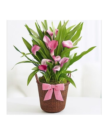 Easter Lilies-Order by Phone Only