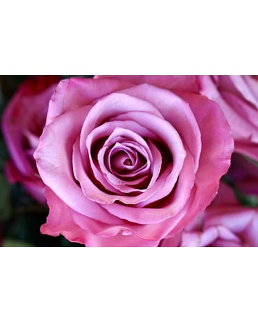 Moody Blues Roses TAX FREE ON SALE