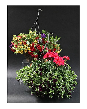 Twin Hanging Baskets