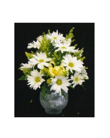 MTF39 Daisy Bubble Bowl Arrangement
