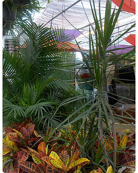 Tropical Plants -